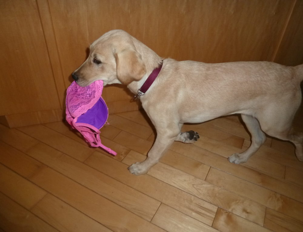 """How to Teach Your Dog to """"Leave It"""" with Positive Reinforcement Training"""