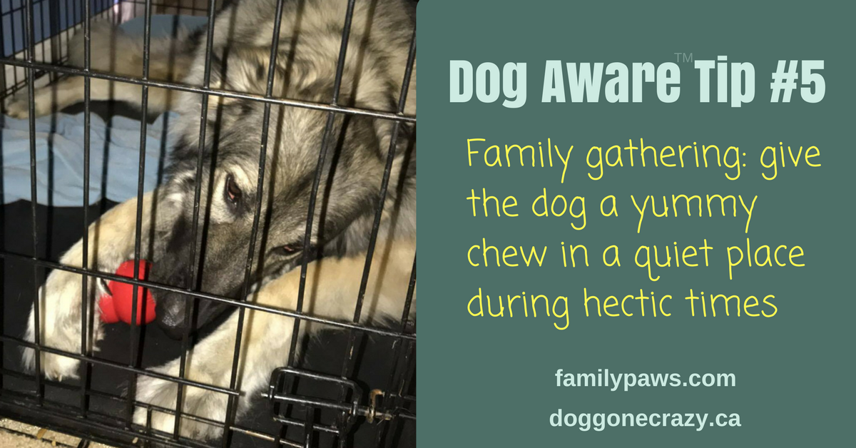 Dog Aware Tip #5: Keep the Dog Happy and Kids Safe During Family Gatherings
