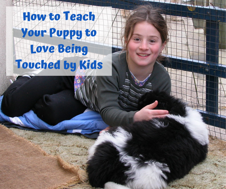 How to Teach Your Puppy to Love Being Touched by Kids