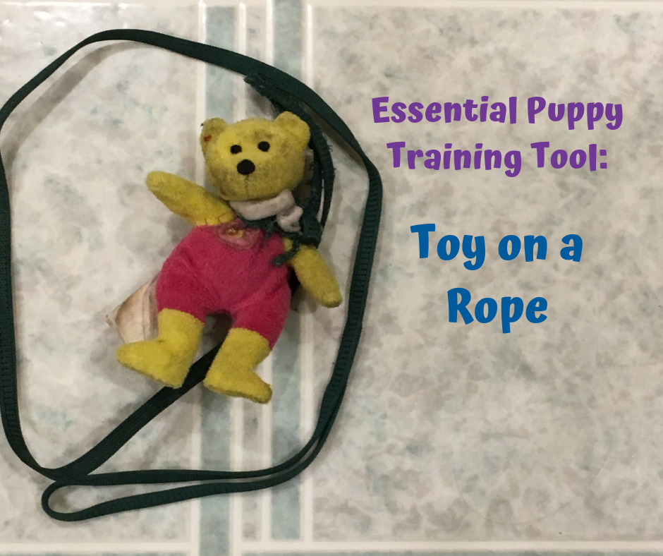 The Essential Puppy Training Tool You've Never Heard Of